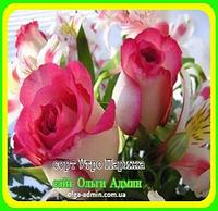 Роза чайно-гибридная Утро Парижа ( саженцы )