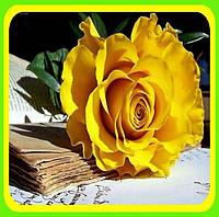 Розы - Чайно-гибридные сорт Керн  ( саженцы )