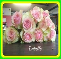 Роза La Belle / Ла Бель (роза чайно-гибридная)