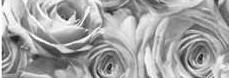 Калька URSUS А4 115г/м Розы Графит UR-50614608R