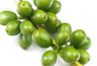 Экстракт зеленого кофе (25% экстракта)