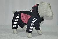 Костюм для собак Крутые 90