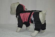 Костюм для собак Крутые 90, фото 2