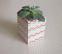 Подарунковий набір - Компактне паперове кашпо із живою рослиною і всіма матеріалами для її посадки