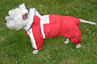 Костюм для собак Аляска