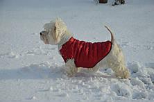 Жилет Стеганый для собак, фото 3
