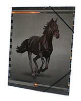 Папка А4 с резинкой картон Mizar Конь 129845