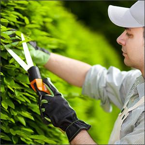 Инструмент для обрезки деревьев
