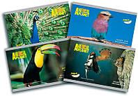 Альбом для рисования А4 24л. Kite мод.242 Animal Planet AP16-242