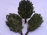 Веники берёзовые