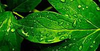 Для чего нужна листовая подкормка растений. Ее основные принципы и применение.