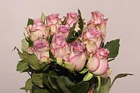 Роза однобутонная