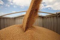 Перевозка зерновых и масличных грузов