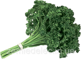 Семена петрушки Рина 50 грамм Rijk Zwaan