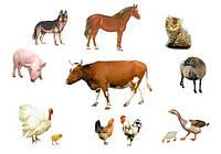 Ветеринарные препараты (общее)