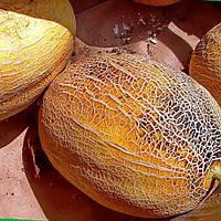Семена дыни Дюна 500 г. компании Агрофирма Поиск