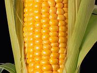 Семена Кукуруза Кремень 200 СВ