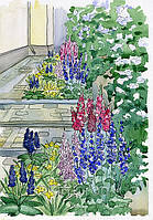 Теневые цветники из многолетников за домом (две узкие полоски).