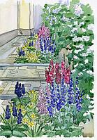 Теневые цветники из многолетников за домом (две узкие полоски). 1