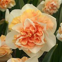 Луковичные растения Нарцисс махровый Flower Surprise