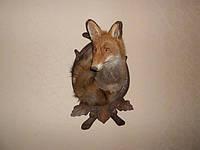 Чучело лисы, фото 1