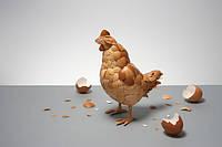 Почему куры едят яйца.