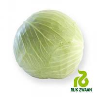 Семена капусты Джинтам F1 калиброванная (Rijk Zwaan), 2500 сем — поздняя (130 дн), для хранения, белокочанная