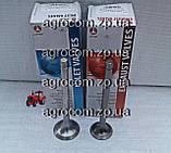 Комплект клапанів МТЗ-80, Д-240 впускний і випускний, фото 2