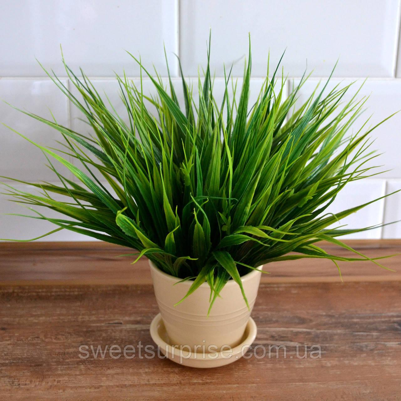 Декоративная трава в горшке для офиса