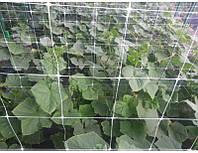 Шпалерная сетка 10 м х 1,7 м