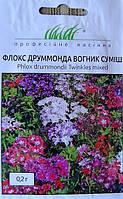 Семена цветов сорт Флокс Друммонда Огонек 0.2 гр
