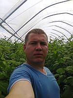 Технология выращивания МАЛИНЫ в почве.