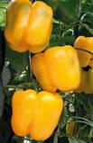Семена перца ГУАЛДА F1 / GUALDA F1, 500 семян, фото 2