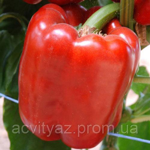 Семена перца КРИМСОН КИНГ F1 / KRIMSON KING F1, 250 семян