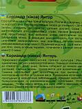 Кориандр Янтарь 20г (кинза), фото 2