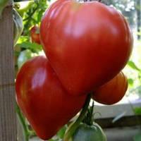 Томат Воловье сердце( красное)