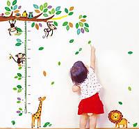 Інтер'єрна наліпка на стіну ростомір Джунглі / Интерьерная наклейка на стену ростомер Джунгли