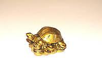 Черепаха на Монетах