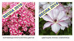 Начат прием заказов на корневища многолетних цветов и цветущие лианы - клематисы