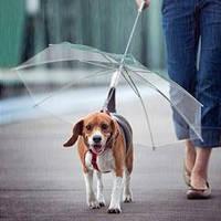 Зонтик для собак, собачий зонт, зонт для выгула собак в дождливую погоду