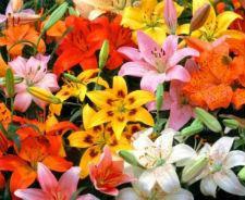Луковицы цветов весна-2021
