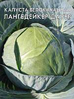 Капуста Лангедейкер Дауэр