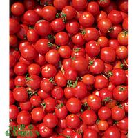 Kitano Томат Конори F1 Kitano Seeds 500 семян