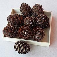 Шишки лиственницы натуральные, 9 шт в упаковке, 20