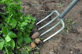 Вилы для вскапывания огорода