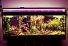Светодиодный фито светильник Т8 9W IP20 (fito spectrum led) Код58831, фото 4