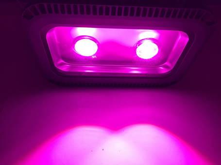 Светодиодный фитопрожектор SL-100GLens 100W IP66 (full fito spectrum led) Код.59030, фото 2