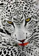 Ковёр Kolibri леопард в серых тонах 1.33х1.90 м.