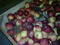 Яблоки 2й сорт