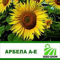 Семена подсолнечника АРБЕЛА A-E